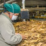 El sector tabacalero recibió cerca de $100 millones en el último mes
