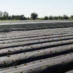 La UEP elevó una propuesta al Programa de Reconversión Tabacalera