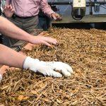 Balanzas habilitadas para el pesaje del tabaco
