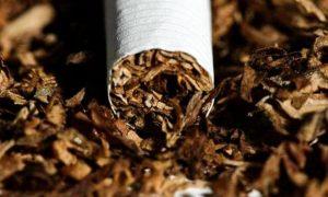 Comienza el pago de $30.000.000 a tabacaleros por la primera grilla de